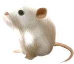 NLD Mice.png