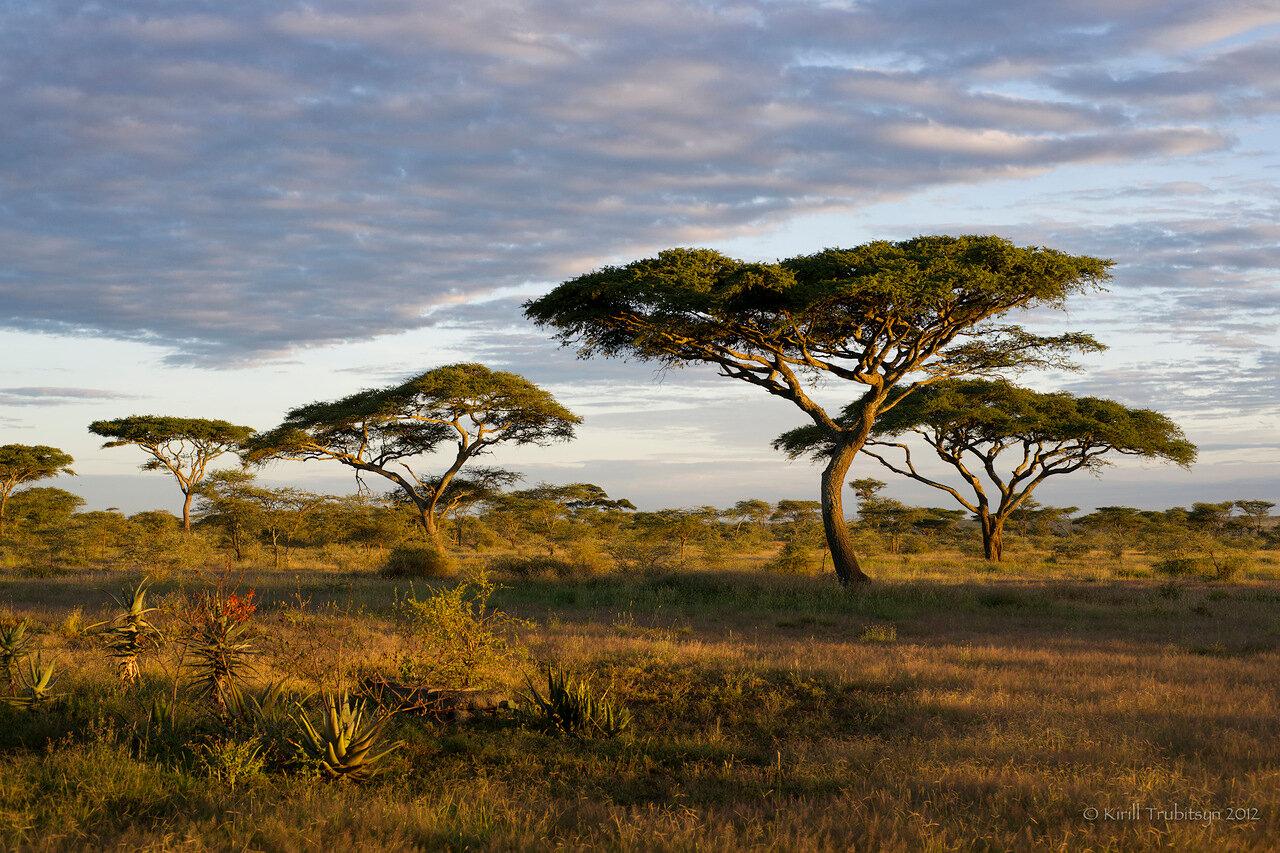 начинающих африканские пейзажи в картинках точка выбрана