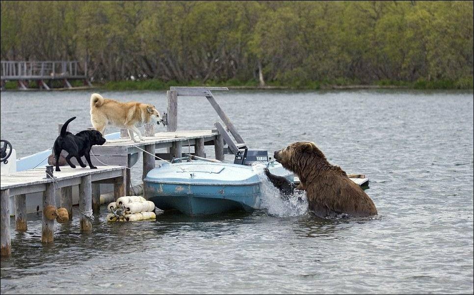 Медведь проголодался