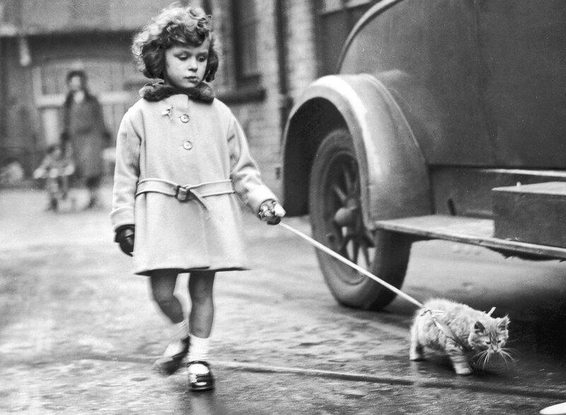 Kitten On Lead