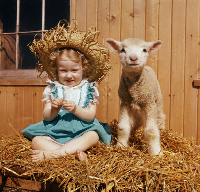 Portrait Of Young Girl And Lamb