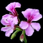 Живые цветы клиппарты доставка цветов санкт петербург ymbols/coup