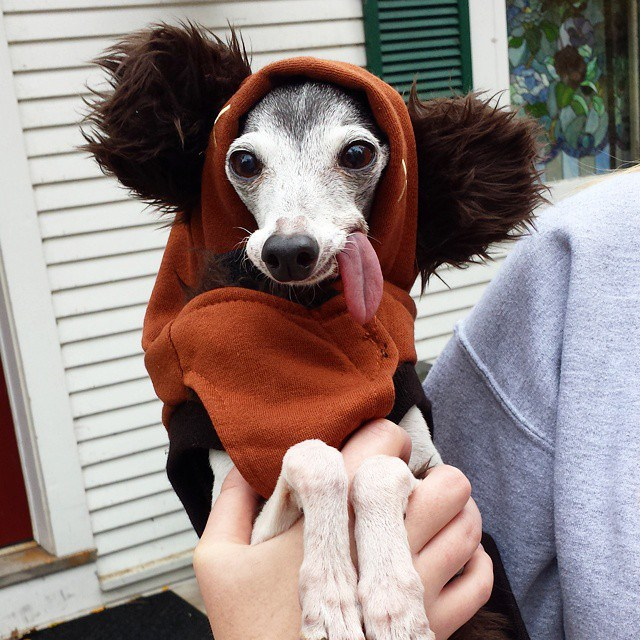 Собака Заппа — двойник ленивца Сида из «Ледникового периода»
