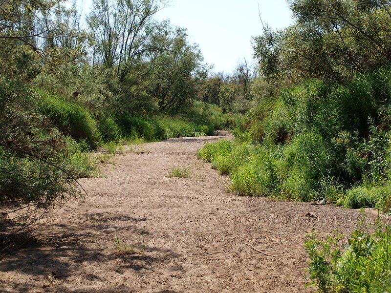 Песчаная дорога, возможно какое-то старое русло небольшой речки рядом с Моломой