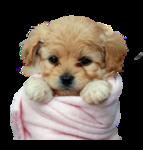 1515_-_dog_-_LOS_TUBES_DE_LUNI.png