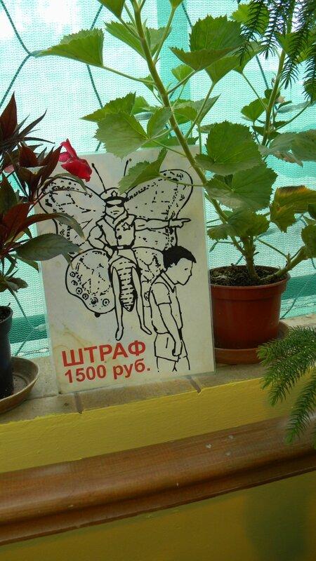 штраф 1500 - не трогайте бабочек