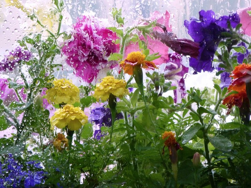 Для Ниночки enshtein65 с благодарностью за поддержку! Желаю такого дождя!!!