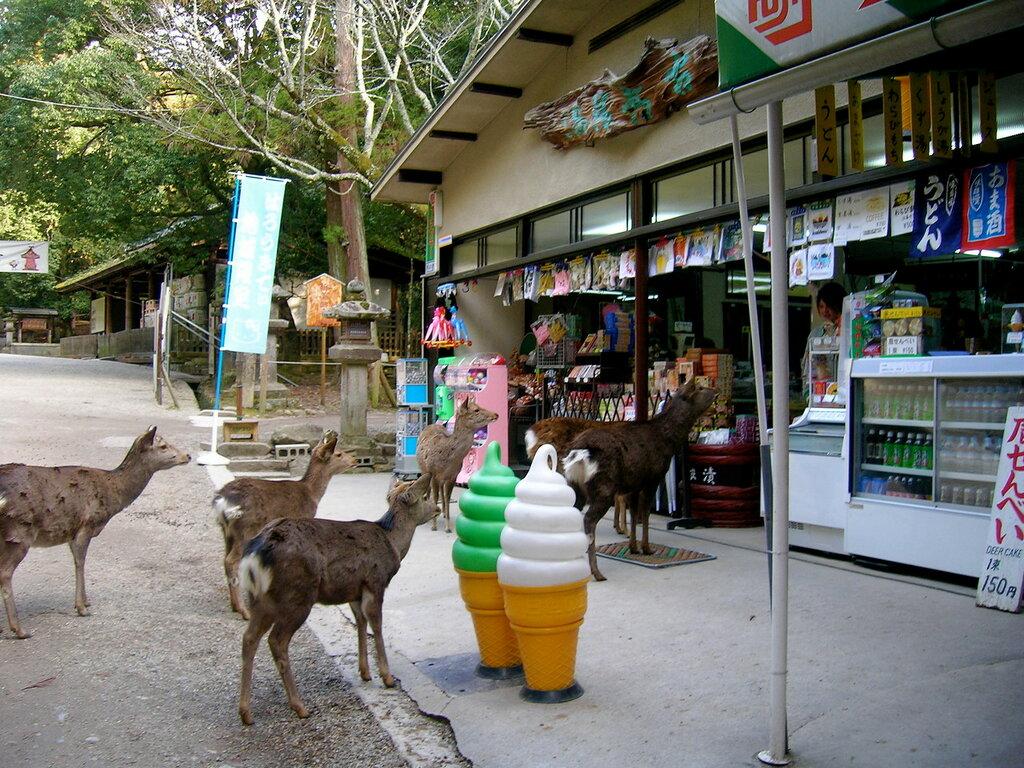 Nara_deer_beg_for_handouts_outside_a_shop_on_Sanjo_Street.JPG