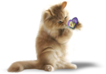 NLD Cat with butterfly sh.png