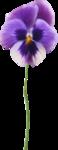 NLD Flower 7.png