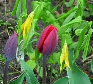 Редкие растения в наших садах - Страница 3 0_12a53e_d503d6a_M