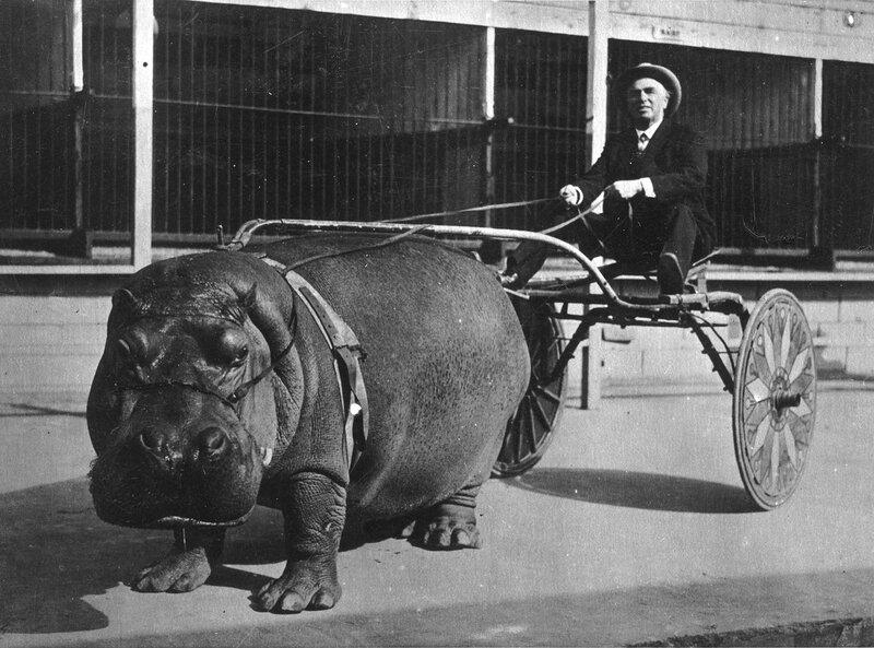 Hippo Power