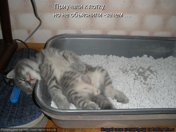 тайота имя для котенка квартиру для