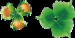 Hazelnuts5 [преобразованншшый].png