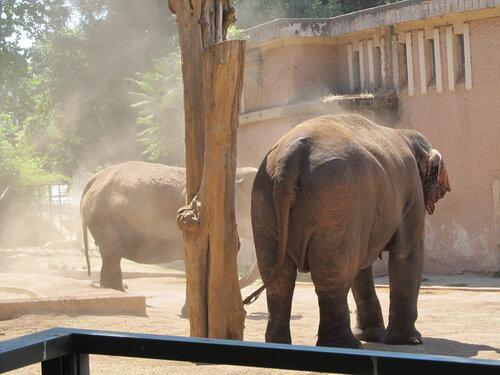 Рим, зоопарк