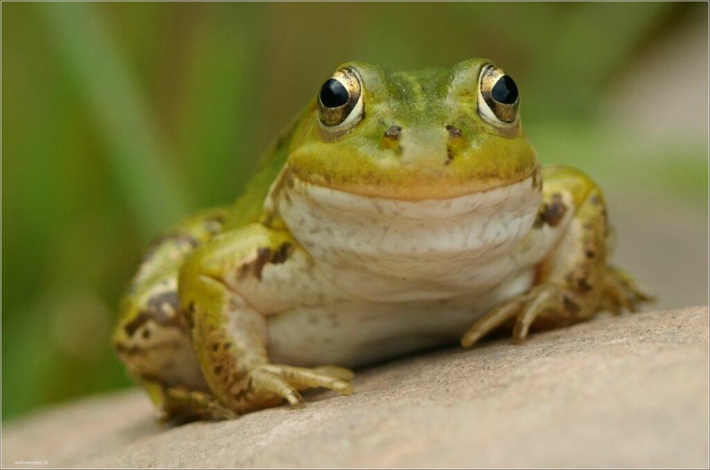 Игривая улыбка красавицы лягушки.