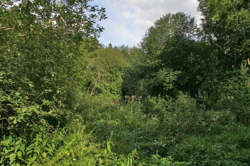 Заросший парк в Батюшково