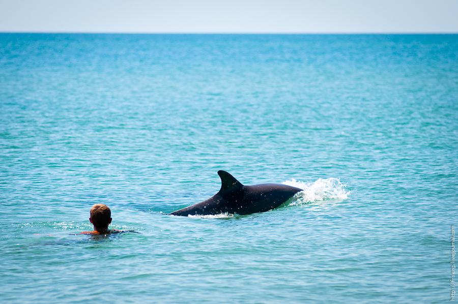 Дельфины Благи (BeeKiteCamp 2012)