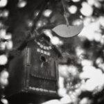Фото Анна Чоботова. Hasselblad 503CW, монокль 70 мм