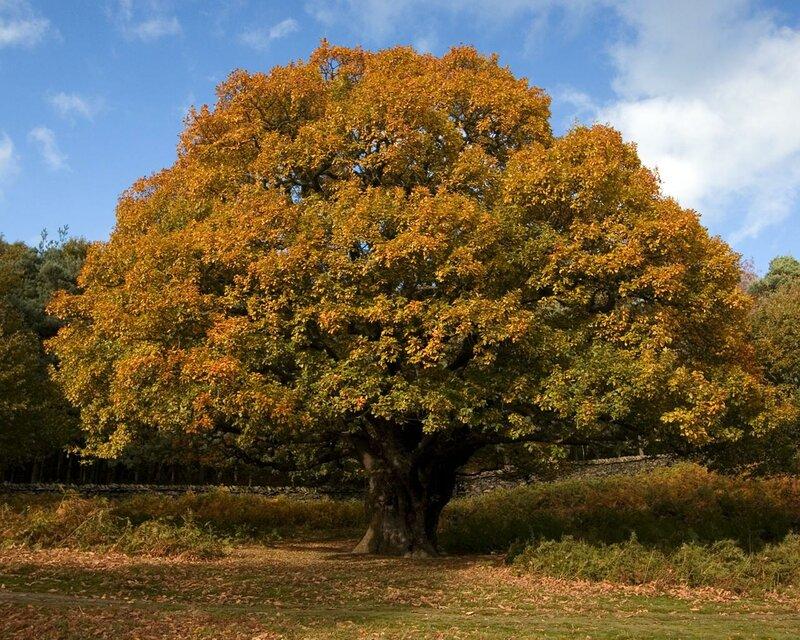Деревя