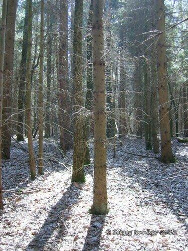 Андрушівка ліс квітень 2012