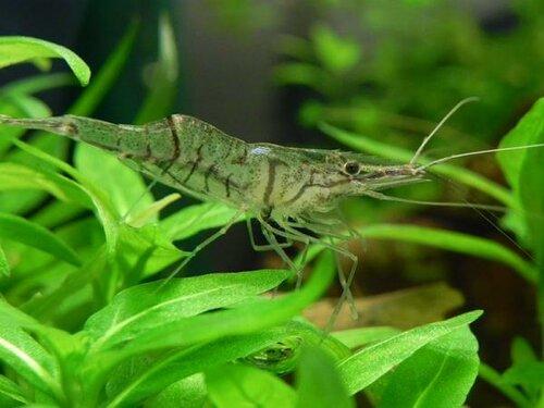 Aquarium Glaser, сентябрь 0_f0c17_85643869_L