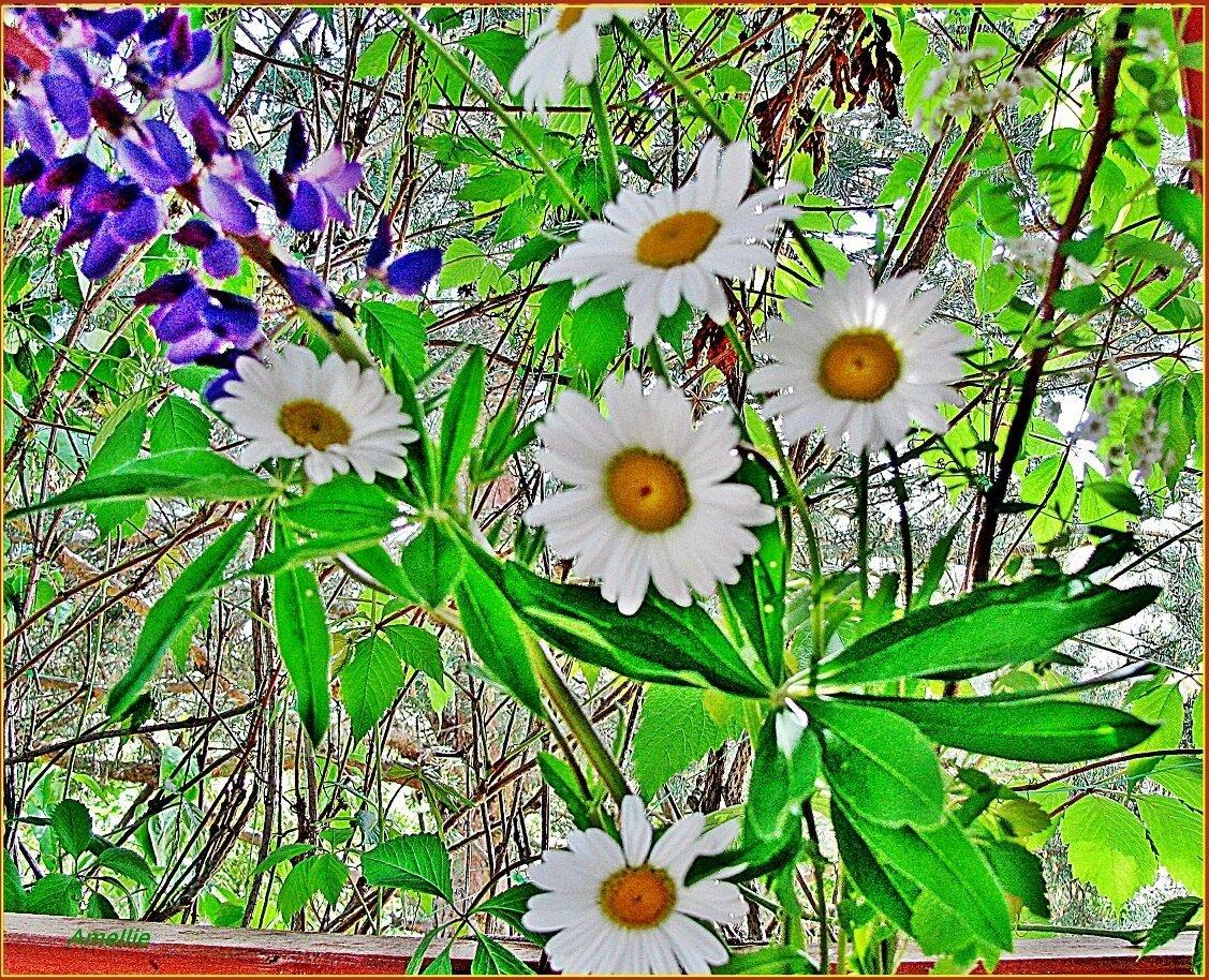 Плейкаст полеые цветы