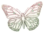 ial_lab_butterfly5.png