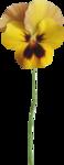 NLD Addon Flower 2.png