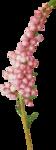 NLD Flower 3.png