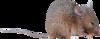 Скрап-набор Junkyard 0_962aa_772e2a8e_XS