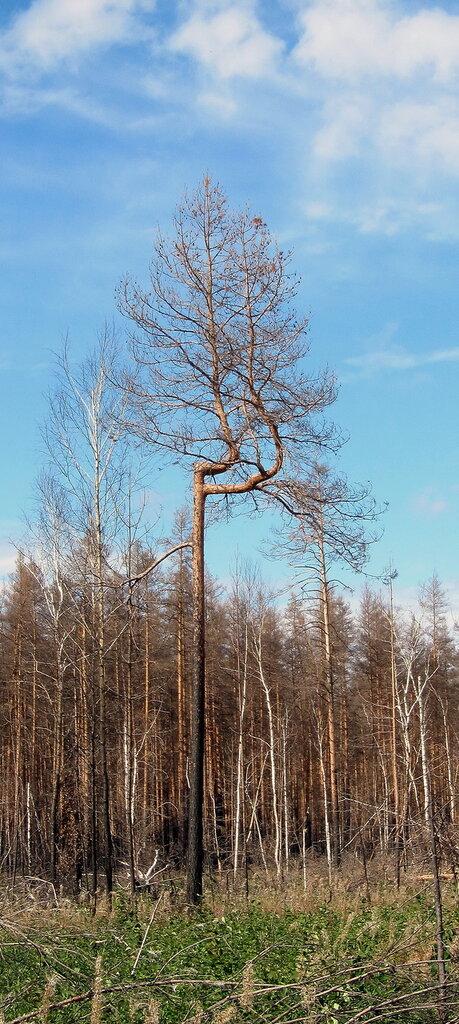 http://img-fotki.yandex.ru/get/6403/126877939.19/0_742ef_95ebfdc3_XXL.jpg