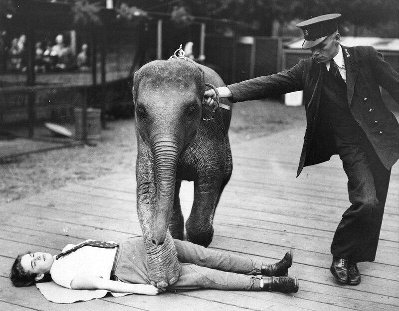 Ba-Bar The Elephant