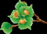 Hazelnuts5 [преобразованный].png