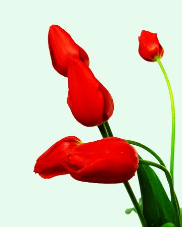 цветы из бисера букеты, панно, бутоньерки.