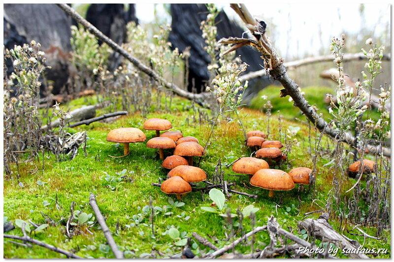 Посадка леса в Тольятти