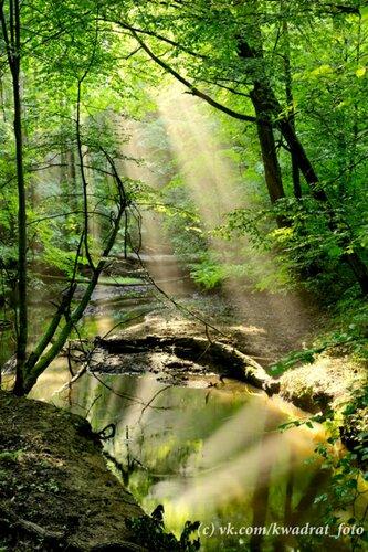 Лесной ручей (2)
