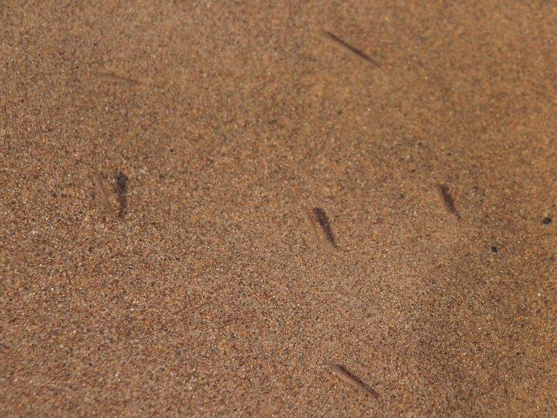 мальки на мелководье пляжа на реке Моломе