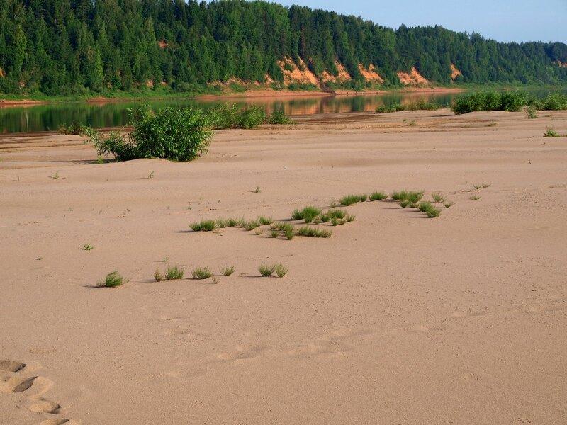редкие кустики на песчаном острове