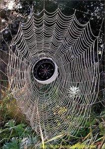 Компас в паутине