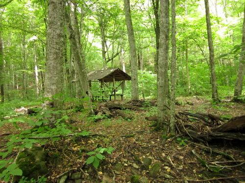 Навес в лесу