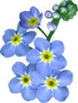 Blue Flowers 2.png