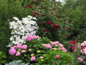 Клумба, цветущая с весны до осени | Форум: дом и дача - ForumHouse