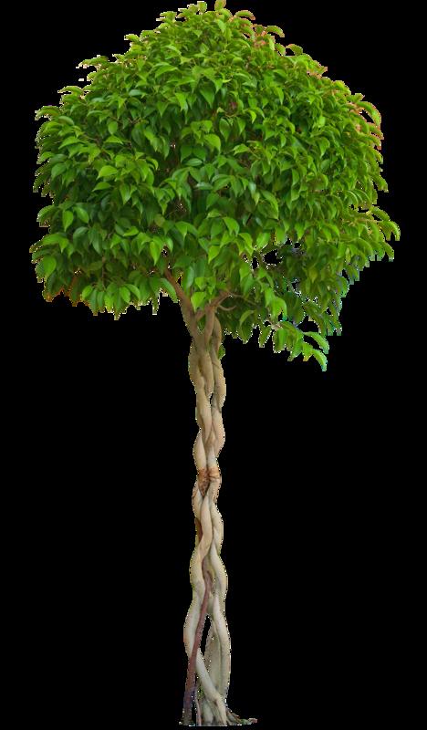 Комнатные растения фото и описание 5