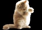 NLD Cat sh.png