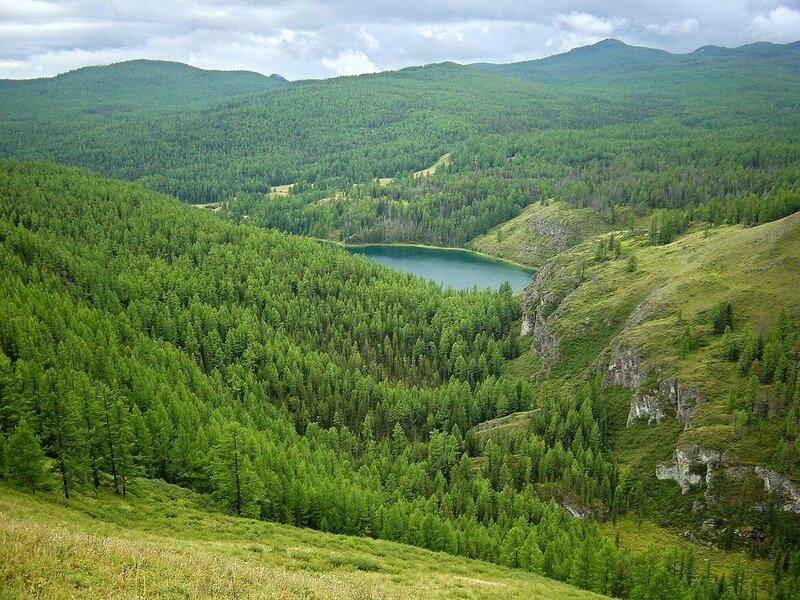Лес Горного Алтая