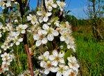 Какие есть виды полевых цветов: разновидности растений 67