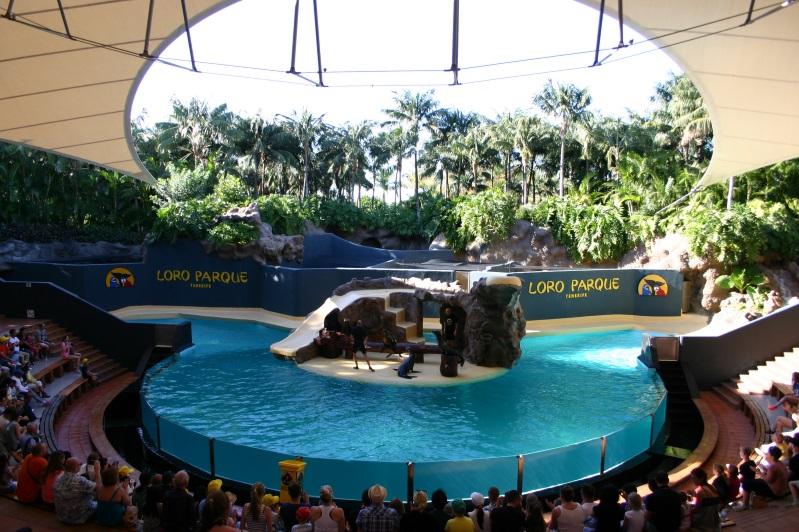 морские котики и лев из Лоро-парка