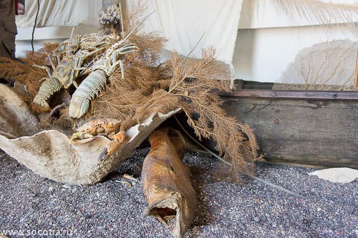 Фотографии Сокотры, музей, огуречные деревья, Архер