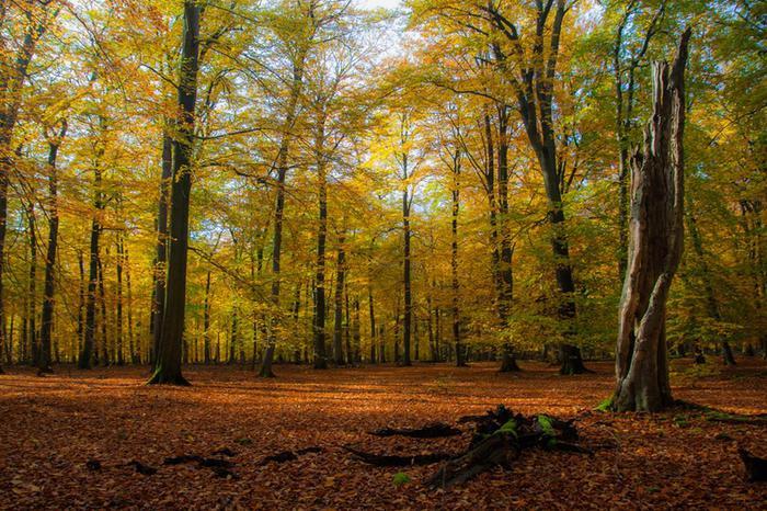 Яркие фотографии: красивая осень в разных странах мира